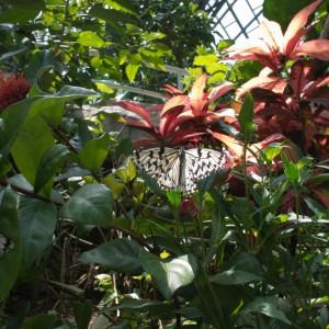 昆虫博物館の放蝶温室で