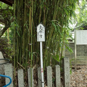 在原神社の夫婦竹